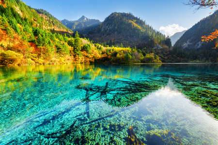 Beautiful view of the Five Flower Lake (Multicolored Lake) among wooded mountains, Jiuzhaigou nature reserve, China. Yellow autumn forest reflected in azure water. Submerged tree trunks at the bottom.