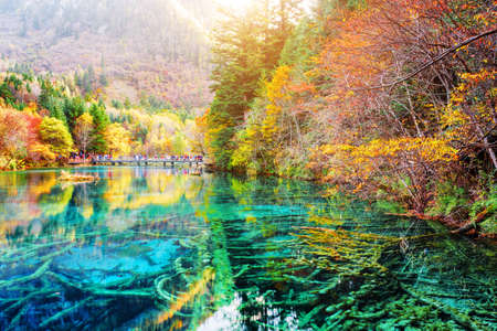 fantastic view: Fantastic view of submerged tree trunks in azure crystal clear water of the Five Flower Lake (Multicolored Lake) among autumn woods in Jiuzhaigou nature reserve (Jiuzhai Valley National Park), China.