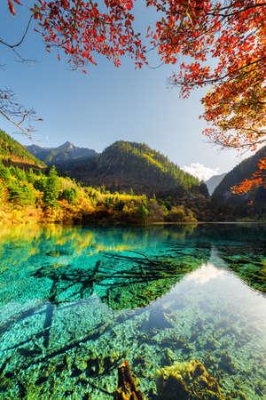 九寨溝自然保護区 (九寨溝渓谷国立公園)、中国での秋の森の中で五花池 (多色湖) の美しい景色。水中の木の幹は、紺碧の水に表示されます。 写真素材