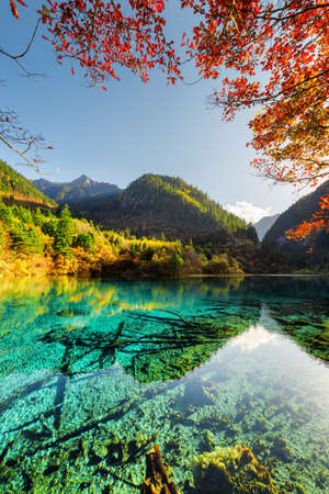 Beautiful view of the Five Flower Lake (Multicolored Lake) among autumn woods in Jiuzhaigou nature reserve (Jiuzhai Valley National Park), China. Submerged tree trunks are visible in azure water.