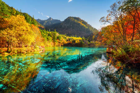 water fall: Beautiful view of the Five Flower Lake (Multicolored Lake) with azure water among fall woods in Jiuzhaigou nature reserve (Jiuzhai Valley National Park), China. Submerged tree trunks at the bottom.