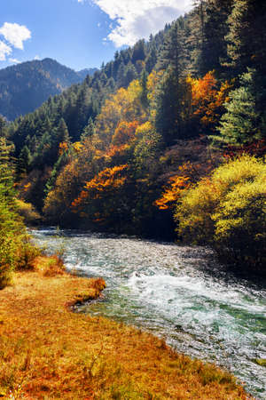 Amazing mountain river with crystal clear water among evergreen forest and colorful fall woods in Jiuzhaigou nature reserve (Jiuzhai Valley National Park), China. Scenic sunny autumn landscape. Stock Photo
