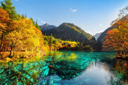 Beautiful view of the Five Flower Lake (Multicolored Lake) among fall woods in Jiuzhaigou nature reserve (Jiuzhai Valley National Park), China. Submerged tree trunks are visible in azure water.