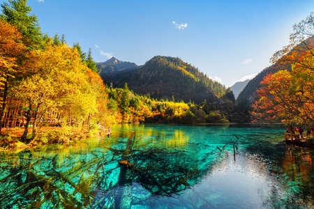 birretes: Hermosa vista de la flor de lago cinco (multicolor Lago), entre bosques de otoño en la reserva natural de Jiuzhaigou (Parque Nacional Valle Jiuzhai), China. troncos de árboles sumergidos son visibles en el agua azul.