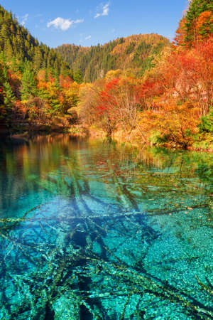 water fall: Scenic view of the Five Flower Lake (Multicolored Lake) with azure crystal water among colorful fall woods in Jiuzhaigou nature reserve, China. Submerged ancient fallen tree trunks at the bottom.