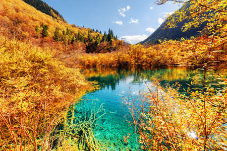 Amazing pond with azure crystal water among colorful fall woods and mountains at the Rize Valley in Jiuzhaigou nature reserve (Jiuzhai Valley National Park), China. Autumn forest reflected in water.