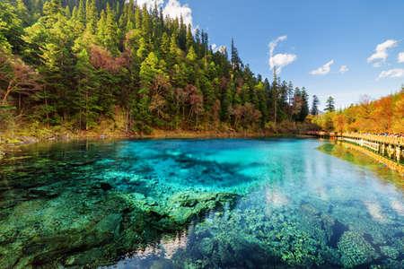 九寨溝自然保護区 (九寨溝渓谷国立公園)、中国の林と常緑樹林を秋紺碧の透明な水の中で 5 色プール (カラフルな池) のすばらしい眺め。
