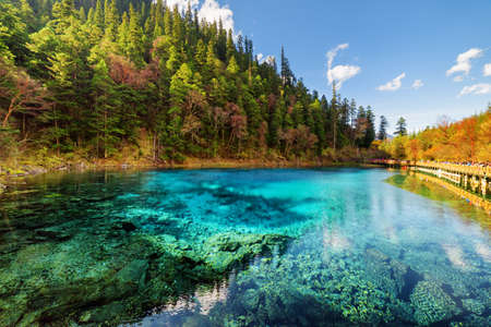 Amazing view of the Five Coloured Pool (the Colorful Pond) with azure crystal clear water among fall woods and evergreen forest in Jiuzhaigou nature reserve (Jiuzhai Valley National Park), China.