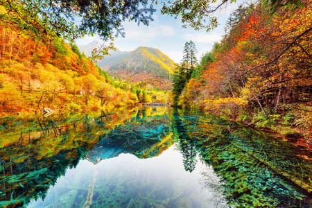 submerged: Wonderful view of the Five Flower Lake (Multicolored Lake) among fall woods in Jiuzhaigou nature reserve, China. Autumn forest reflected in crystal clear water. Submerged tree trunks at the bottom.