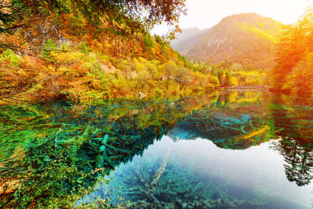 Scenic view of the Five Flower Lake (Multicolored Lake) among fall woods in Jiuzhaigou nature reserve, China. Autumn forest reflected in crystal clear water. Submerged tree trunks at the bottom.