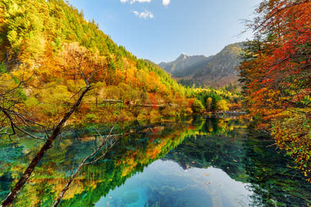 valley view: Fantastic view of fall woods reflected in the Five Flower Lake (Multicolored Lake), Jiuzhaigou nature reserve (Jiuzhai Valley National Park), China. Submerged tree trunks are visible in crystal water. Stock Photo