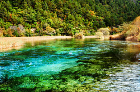 clear water: Beautiful azure river with crystal clear water among evergreen woods in Jiuzhaigou nature reserve (Jiuzhai Valley National Park) of Sichuan province, China. Amazing forest landscape.