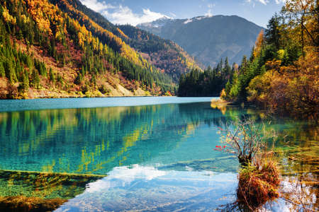submerged: Beautiful view of the Arrow Bamboo Lake with azure water among mountains and colorful fall woods in Jiuzhaigou nature reserve (Jiuzhai Valley National Park), China. Submerged tree trunks at the bottom