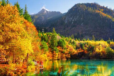 中国九寨溝自然保護区のカラフルな秋の森の中で五花池 (多色湖) の幻想的な眺め。秋の森は、紺碧の水に反映されます。バック グラウンドで雪をか