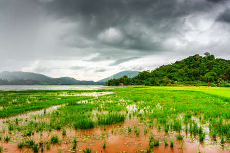 tay: The Lak Lake and green rice field, the Tay Nguyen (the Central Highlands), Dak Lak Province (Daklak), Vietnam. Scenic dramatic stormy sky in background. The Lak Lake is a popular tourist destination.