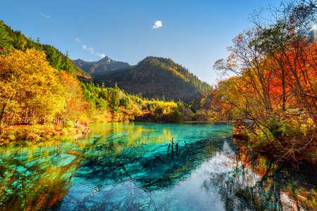 在九寨溝自然保護區秋季森林(九寨溝國家公園)的五個花湖(湖五彩)與蔚藍色水的驚人的觀點,中國。淹沒的樹幹底部。 版權商用圖片