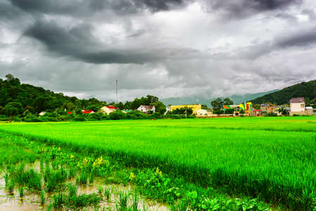 tay: Amazing bright green rice fields at Lien Son, the Tay Nguyen (the Central Highlands), Dak Lak Province (Daklak), Vietnam. Dramatic stormy sky and wooded mountains in fog are visible in background. Stock Photo