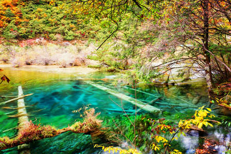 submerged: Azure lake with submerged tree trunks among fall woods. Amazing landscape with crystal clear water of the pond in autumn forest. Jiuzhaigou nature reserve (Jiuzhai Valley National Park), China. Stock Photo