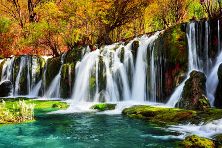 water fall: Amazing waterfall and azure lake with crystal clear water among fall woods in Jiuzhaigou nature reserve (Jiuzhai Valley National Park) of Sichuan province, China. Beautiful autumn forest landscape.