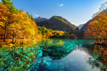submerged: Scenic view of the Five Flower Lake (Multicolored Lake) among fall woods in Jiuzhaigou nature reserve (Jiuzhai Valley National Park), China. Submerged tree trunks are visible in azure crystal water.