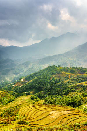 lien: Sunlit green rice terraces at highlands of Sapa District, Lao Cai Province, Vietnam. The Hoang Lien Mountains and stormy sky in background. Sa Pa is a popular tourist destination of Asia.