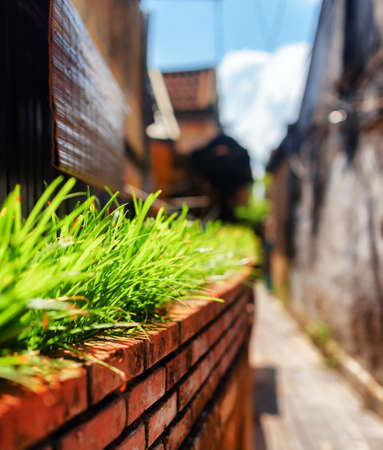 old town house: Green grass beside wall of house on narrow street in old town. Shallow depth of field.