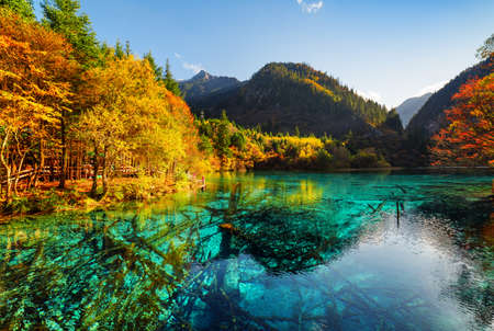 water fall: Fantastic view of the Five Flower Lake (Multicolored Lake) among fall woods in Jiuzhaigou nature reserve (Jiuzhai Valley National Park), China. Submerged tree trunks are visible in azure water.