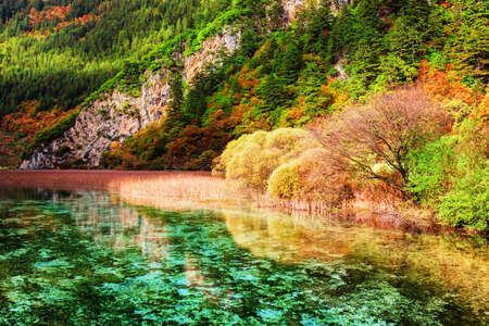 plateau: Beautiful view of amazing river with crystal clear water among colorful fall woods in Jiuzhaigou nature reserve (Jiuzhai Valley National Park) of Sichuan province, China. Autumn forest landscape.