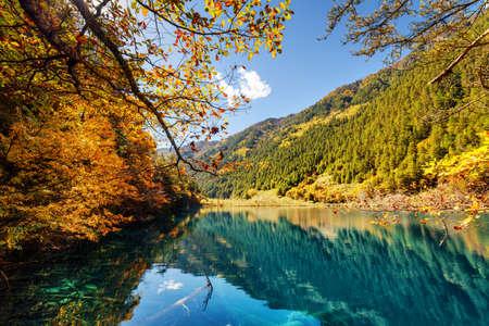 Vista escénica del lago con los troncos de árbol sumergidos entre el bosque y las montañas coloridos de la caída, reserva de naturaleza de Jiuzhaigou (parque nacional) del valle de Jiuzhai, China. Bosque del otoño y cielo azul reflejados en agua. Foto de archivo - 81193486