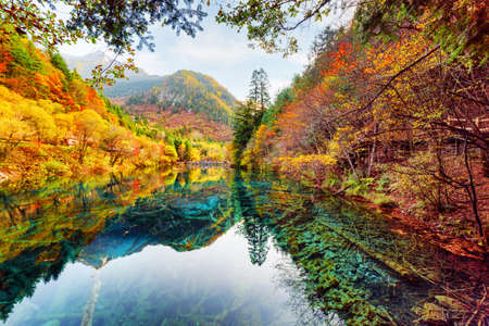 Amazing view of the Five Flower Lake (Multicolored Lake) among fall woods in Jiuzhaigou nature reserve, China. Autumn forest reflected in crystal clear water. Submerged tree trunks at the bottom.