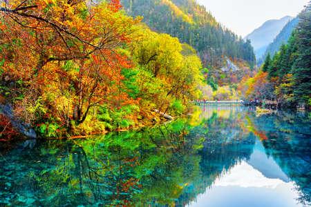 カラフルな秋の森と九寨溝自然保護区 (九寨溝渓谷国立公園)、中国の山の中で驚くほどの 5 花 (多色湖) のビュー。秋の森は、水に反映されます。 写真素材