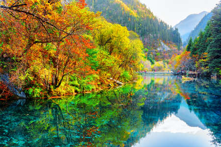 Amazing view of the Five Flower Lake (Multicolored Lake) among colorful fall woods and mountains in Jiuzhaigou nature reserve (Jiuzhai Valley National Park), China. Autumn forest reflected in water. Stockfoto