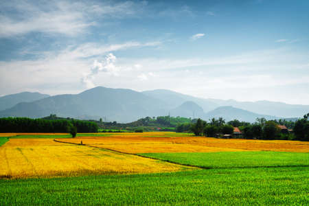 Amazing bright green, yellow and orange rice fields at different stages of maturity. Various phases of rice cultivation. Beautiful mountains are visible in background. Scenic colorful summer landscape