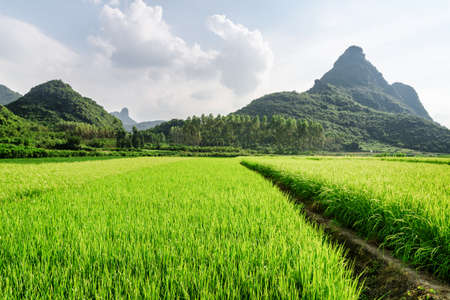 Beautiful bright green rice fields and scenic karst mountains on blue sky background. Wonderful landscape at Yangshuo County of Guilin, China. Yangshuo is a popular tourist destination of Asia. Stock Photo