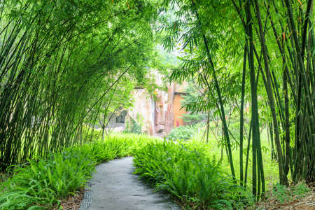 Amazing stone walkway among ferns and green bamboo trees in park.