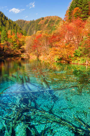 Fantastic view of the Five Flower Lake (Multicolored Lake) with azure crystal water among colorful fall woods in Jiuzhaigou nature reserve, China. Submerged ancient fallen tree trunks at the bottom.