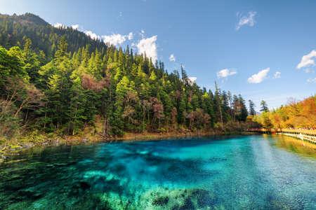 Erstaunliche Aussicht auf den fünffarbigen Pool (den bunten Teich) mit azurblauem kristallklarem Wasser zwischen Herbstwald und bewaldeten Bergen im Naturschutzgebiet Jiuzhaigou (Jiuzhai Valley National Park), China.