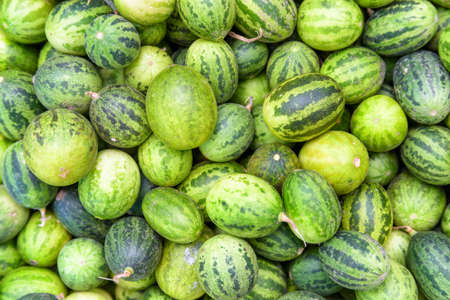 Ripe green small watermelons. Freshly harvested sweet fruits. Striped crust of watermelons. Healthy eco food. Product of organic farming. Fruit background.