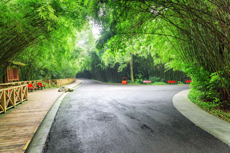 Road intersection in bamboo woods. Scenic road through forest. Beautiful green bamboo trees in park. Zdjęcie Seryjne - 125871336