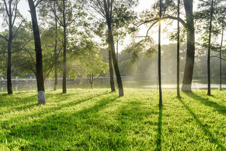 Scenic shadows of trees on green grass in park. Amazing lake is visible through woods at sunset. Beautiful landscape on summer day.