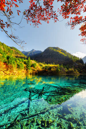 Amazing view of the Five Flower Lake (Multicolored Lake) among autumn woods in Jiuzhaigou nature reserve (Jiuzhai Valley National Park), China. Submerged tree trunks are visible in azure crystal water Zdjęcie Seryjne