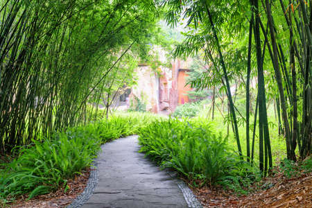 Stone walkway among ferns and green bamboo trees in park.