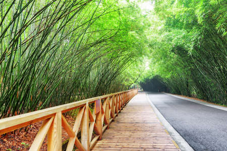 Scenic wooden walkway along road among bamboo woods. Amazing road through forest. Beautiful green bamboo trees. Zdjęcie Seryjne - 125871755