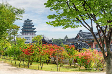 Colorful autumn view of garden at Gyeongbokgung Palace in Seoul, South Korea. Beautiful tower of the National Folk Museum of Korea is visible on blue sky background. Wonderful fall cityscape. Publikacyjne