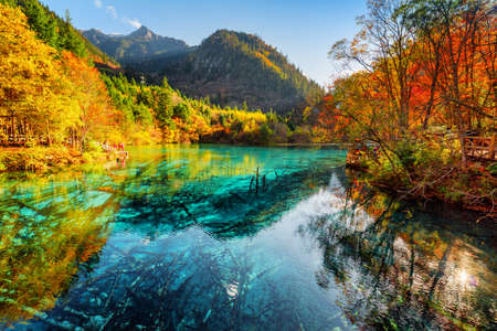 Fantastic view of the Five Flower Lake (Multicolored Lake) with azure water among fall woods in Jiuzhaigou nature reserve (Jiuzhai Valley National Park), China. Submerged tree trunks at the bottom.