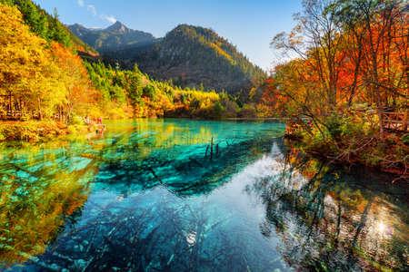 Fantastyczny widok na jezioro pięciu kwiatów (jezioro wielokolorowe) z lazurową wodą wśród lasów jesiennych w rezerwacie przyrody Jiuzhaigou (Park Narodowy Jiuzhai Valley), Chiny. Na dole zanurzone pnie drzew.