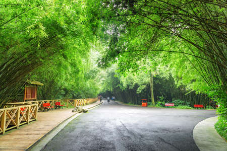 Amazing road intersection in bamboo woods. Scenic road through forest. Beautiful green bamboo trees in park.