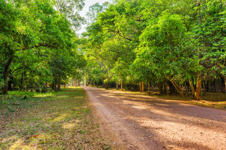 Gorgeous morning view of road through rainforest. Pathway among green woods. Wonderful landscape.