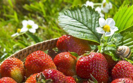 fresh strawberry  photo