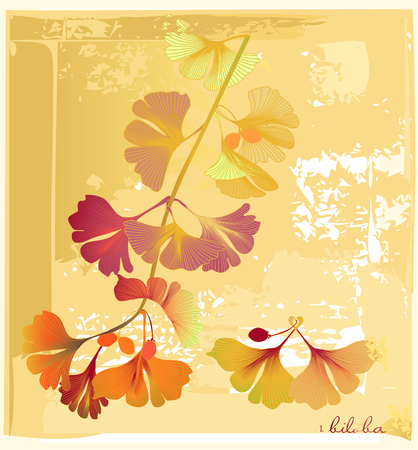 biloba in old herbarium Stock Vector - 4550510